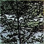 formelinda-150x150